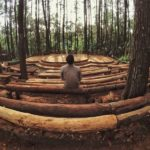 Exploring the Asri Pine Forest